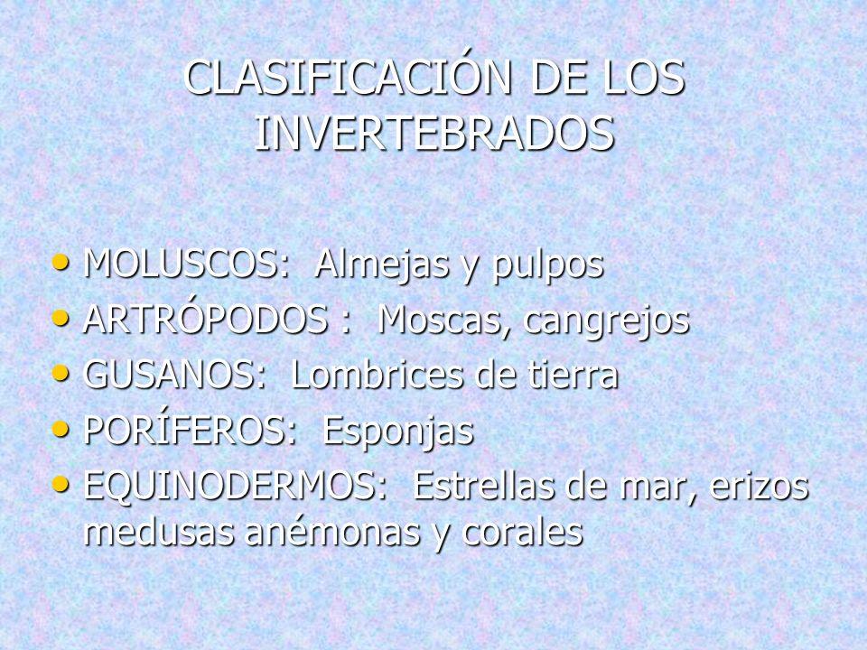 CARACTERISTICAS DE LOS INVERTEBRADOS NO TIENEN COLUMNA VERTEBRAL. NO TIENEN COLUMNA VERTEBRAL. PUEDEN TENER CAPARAZÓN O NO. PUEDEN TENER CAPARAZÓN O N