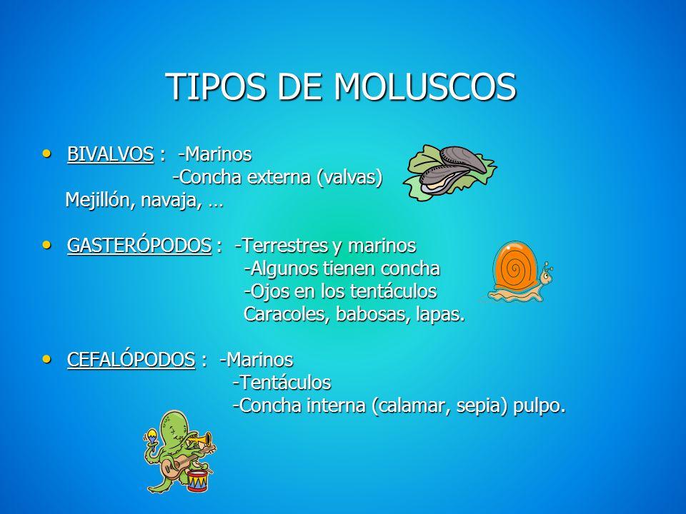 CLASIFICACIÓN DE LOS INVERTEBRADOS MOLUSCOS: Almejas y pulpos MOLUSCOS: Almejas y pulpos ARTRÓPODOS : Moscas, cangrejos ARTRÓPODOS : Moscas, cangrejos