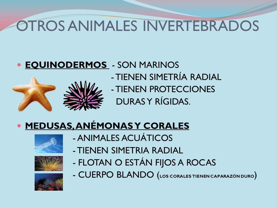 OTROS ANIMALES INVERTEBRADOS GUSANOS - TERRESTRES (lombriz) - ACUÁTICOS (nereis) - PARÁSITOS (sanguijuela) Tienen el cuerpo alargado y blando formado