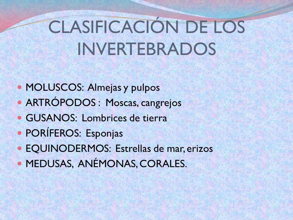 CARACTERISTICAS DE LOS INVERTEBRADOS NO TIENEN COLUMNA VERTEBRAL. PUEDEN TENER CAPARAZÓN O NO. PUEDEN TENER PIEL DURA O NO. SE REPRODUCEN POR HUEVOS.(