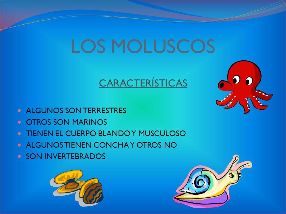 CLASIFICACIÓN DE LOS INVERTEBRADOS MOLUSCOS: Almejas y pulpos ARTRÓPODOS : Moscas, cangrejos GUSANOS: Lombrices de tierra PORÍFEROS: Esponjas EQUINODE