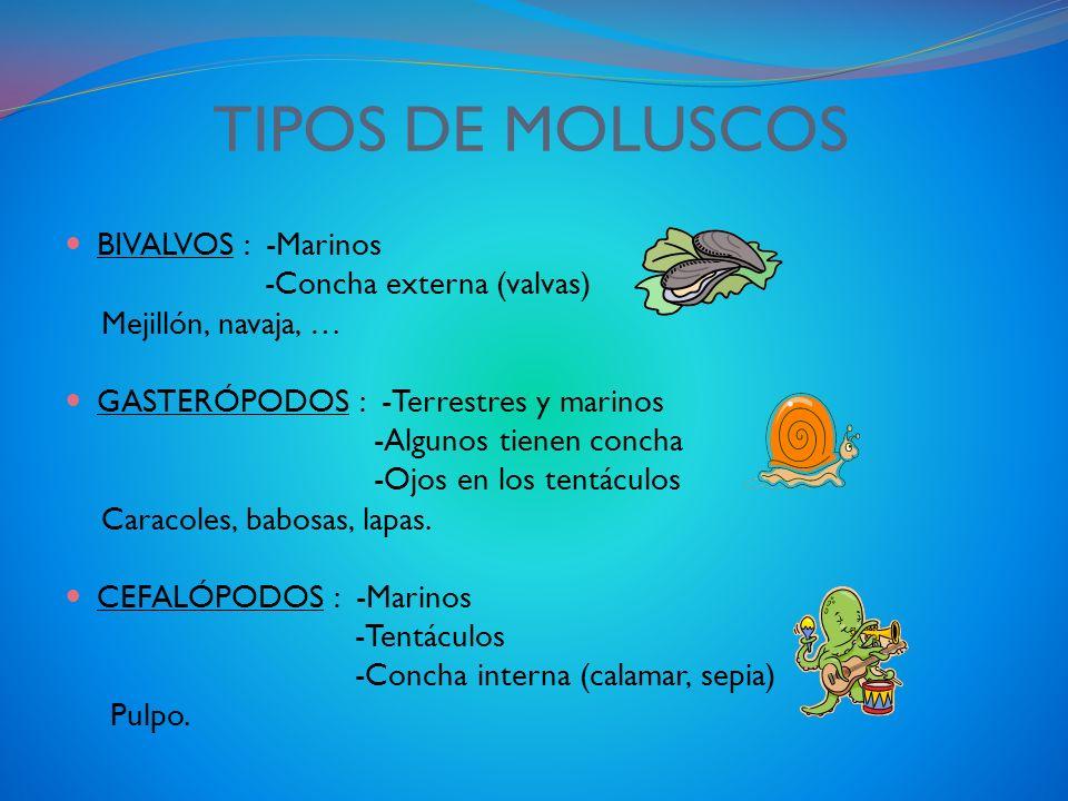 LOS MOLUSCOS CARACTERÍSTICAS ALGUNOS SON TERRESTRES OTROS SON MARINOS TIENEN EL CUERPO BLANDO Y MUSCULOSO ALGUNOS TIENEN CONCHA Y OTROS NO SON INVERTE