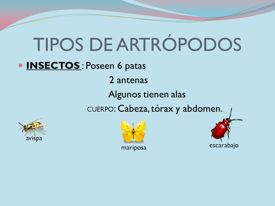 LOS ARTRÓPODOS CARACTERÍSTICAS POSEEN PATAS ARTICULADAS CUERPO DIVIDIDO EN PARTES PIEL ENDURECIDA (ALGUNOS POSEEN CORAZA GRUESA) SON INVERTEBRADOS