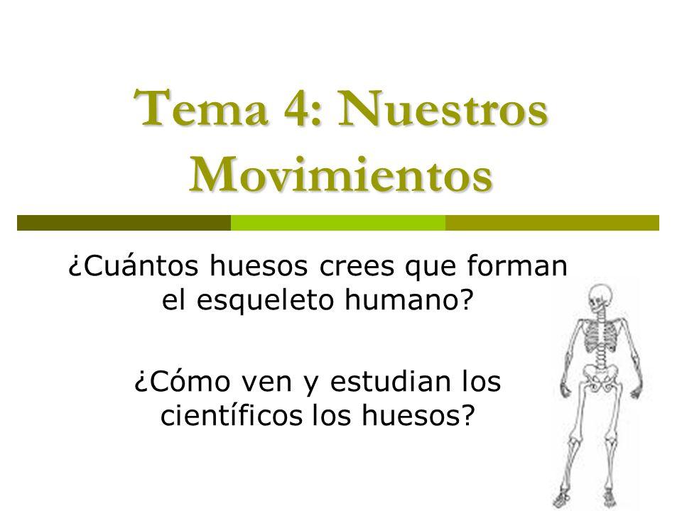 Tema 4: Nuestros Movimientos ¿Cuántos huesos crees que forman el esqueleto humano? ¿Cómo ven y estudian los científicos los huesos?