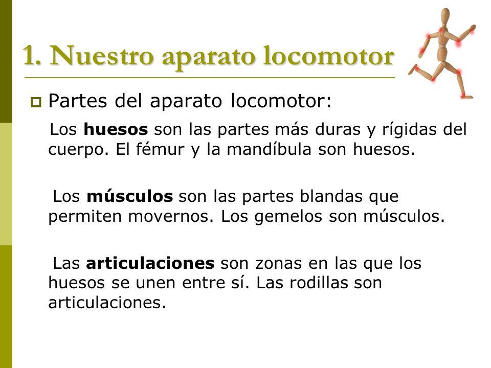1. Nuestro aparato locomotor Partes del aparato locomotor: Los huesos son las partes más duras y rígidas del cuerpo. El fémur y la mandíbula son hueso