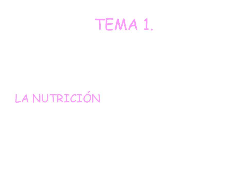 TEMA 11. LA ORGANIZACIÓN DE LA COMUNIDAD