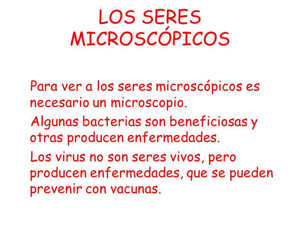 LOS HONGOS Las setas son los aparatos reproductores de los hongos que viven en el suelo.