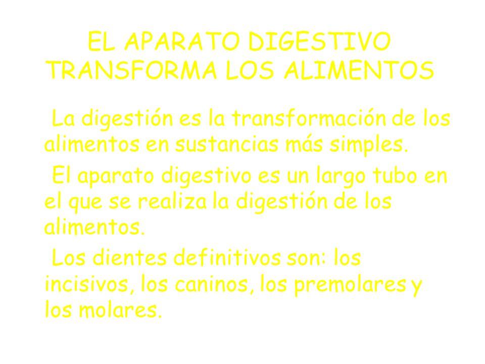 EL APARATO DIGESTIVO TRANSFORMA LOS ALIMENTOS La digestión es la transformación de los alimentos en sustancias más simples.