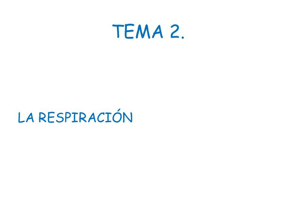 TEMA 2. LA RESPIRACIÓN