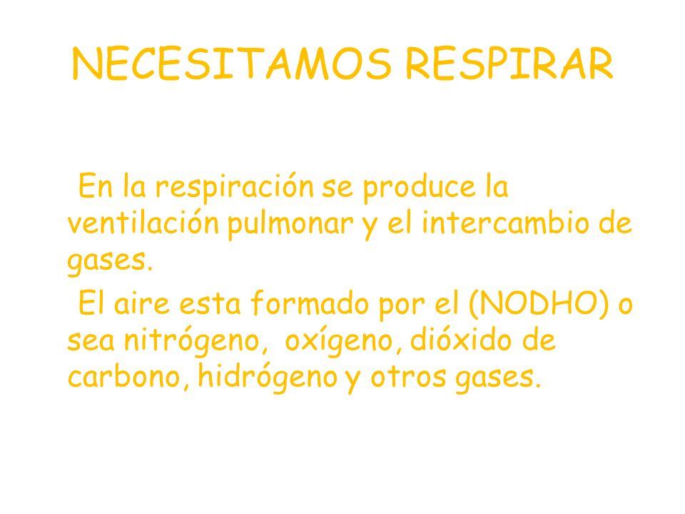 NECESITAMOS RESPIRAR En la respiración se produce la ventilación pulmonar y el intercambio de gases.