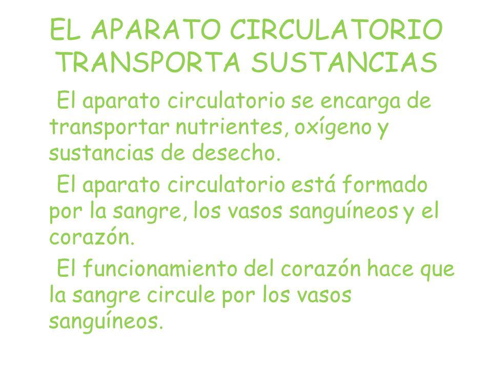 EL APARATO CIRCULATORIO TRANSPORTA SUSTANCIAS El aparato circulatorio se encarga de transportar nutrientes, oxígeno y sustancias de desecho.