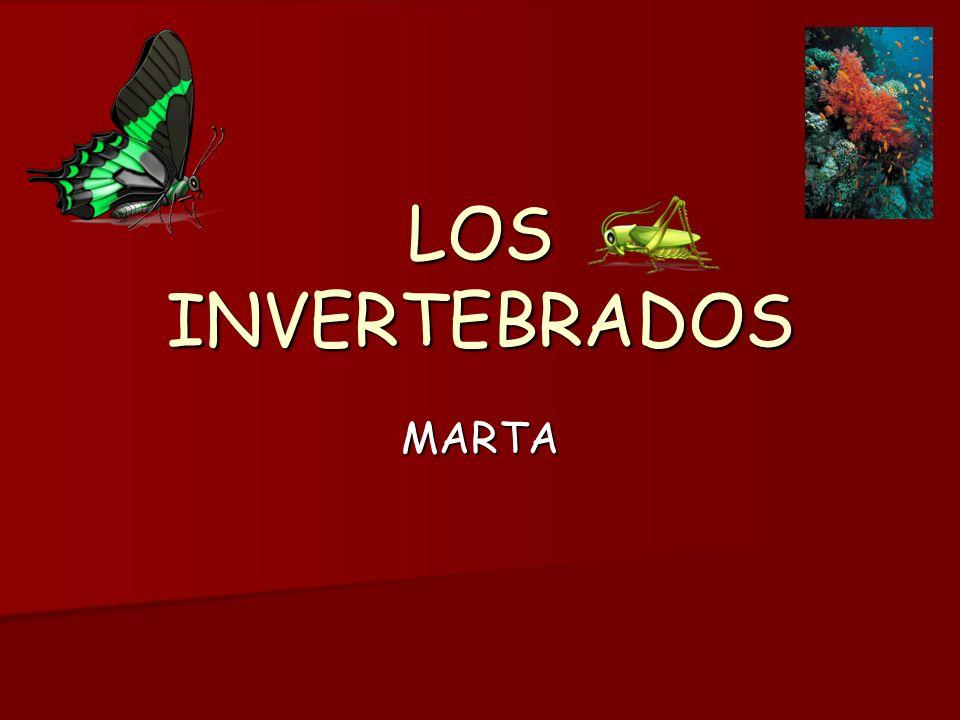 Los invertebrados Los invertebrados Caracteristicas Caracteristicas : -No tienen columna vertebral.