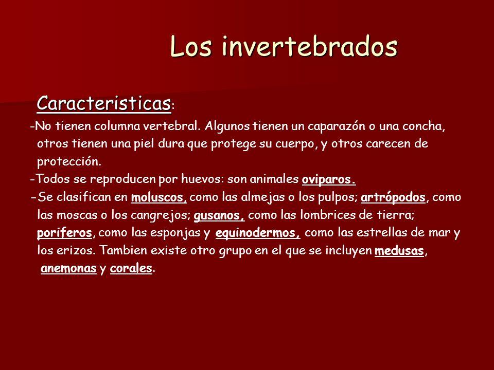 MOLUSCOS Caracteristicas: Caracteristicas: - Los moluscos pueden ser terrestres.
