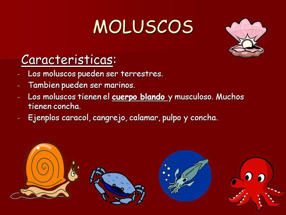 MOLUSCOS Tipos: Tipos: - BIVALVOS, GASTEROPODOS Y CEFALOPODOS.