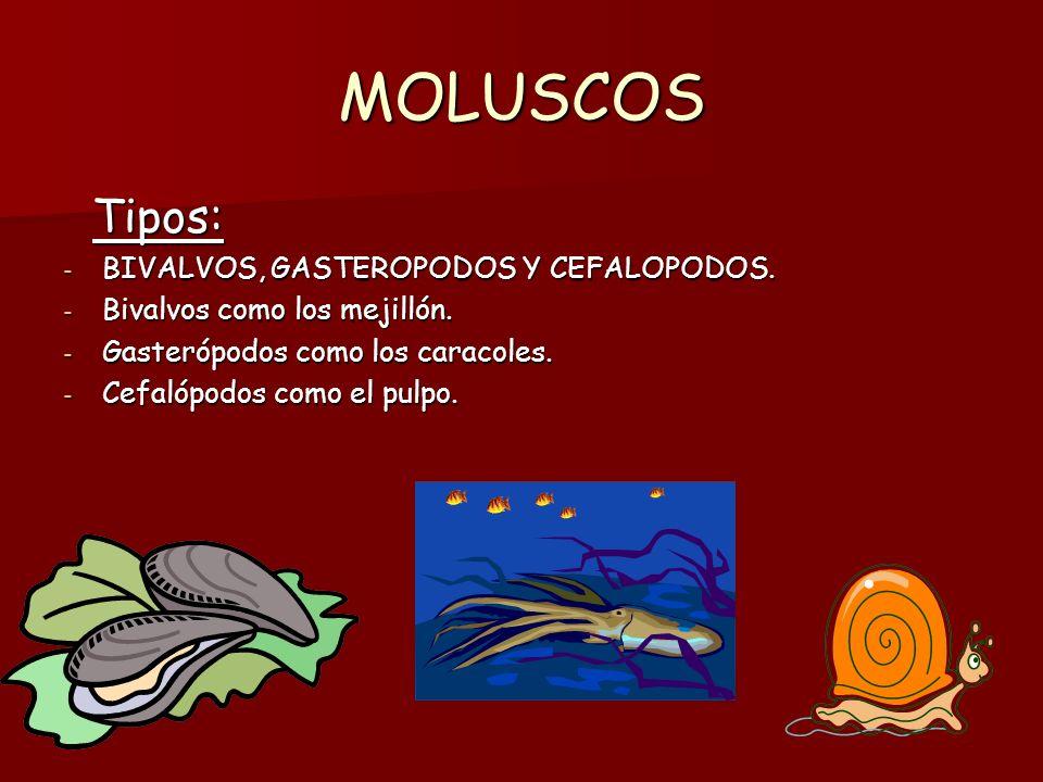 MEDUSAS, ANEMONAS Y CORALES.Características: Características: - Son animales acuáticos.