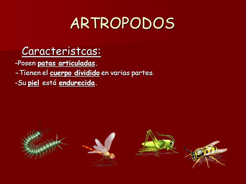 TIPOS DE ARTROPODOS Insectos: Insectos: -Insectos como las avispas, las mariposas y los escarabajos.