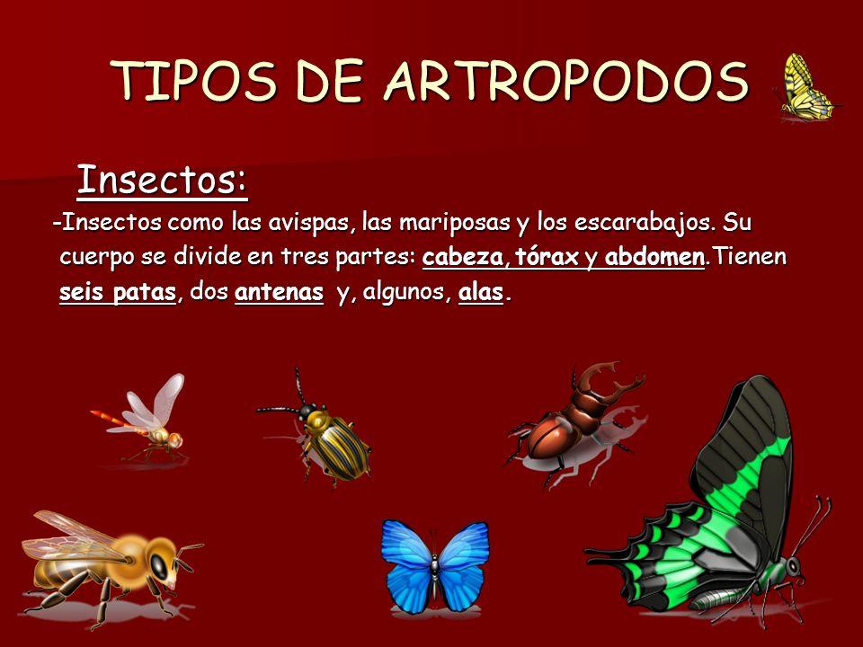 ARACNIDOS Características: Características: - Como las arañas y los escorpiones.