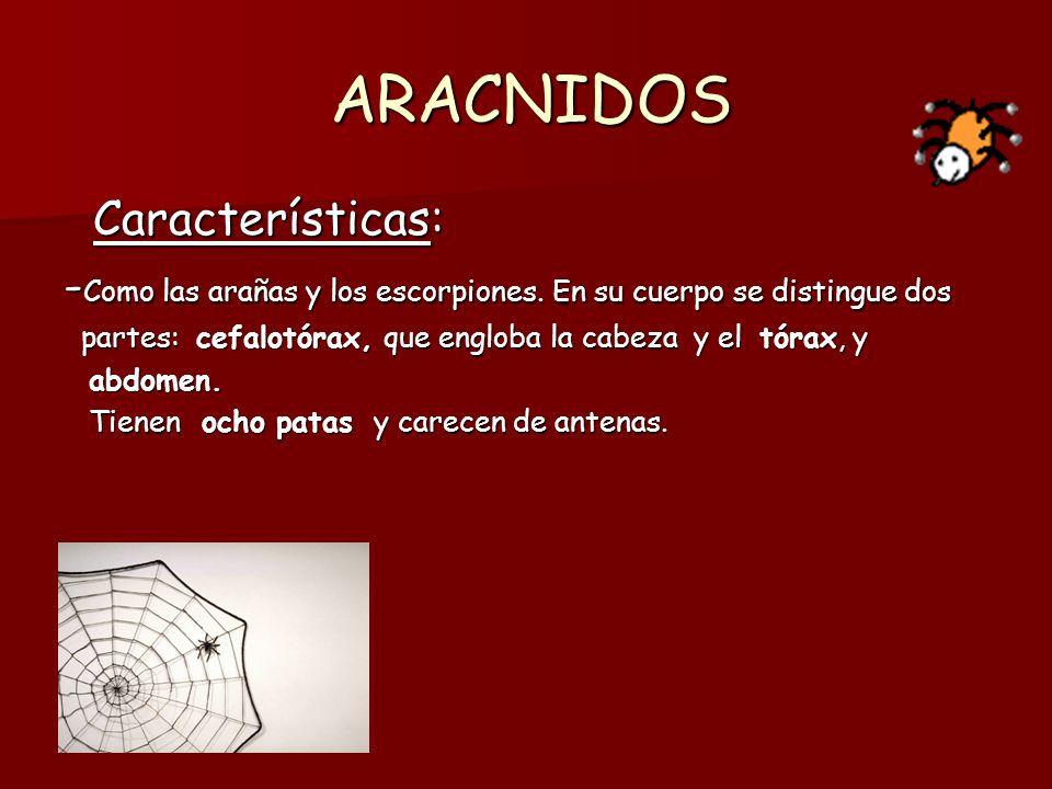 CRUTACEOS Características: Características: - Como los cangrejos y las gambas.