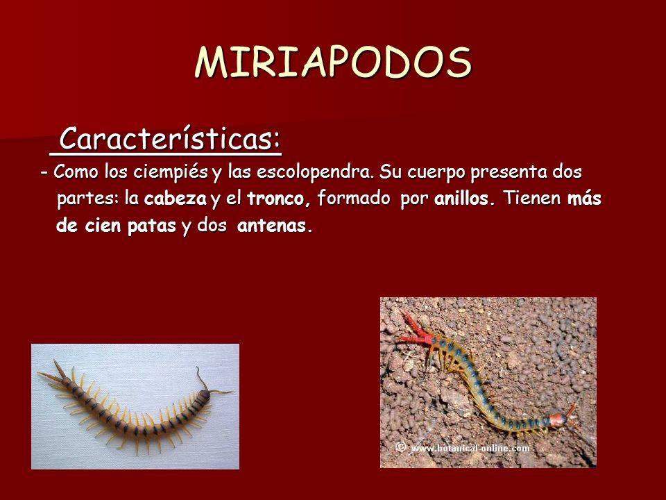 LOS INSECTOS SOCIALES Característica: Característica: -Algunos insectos viven en colonias.