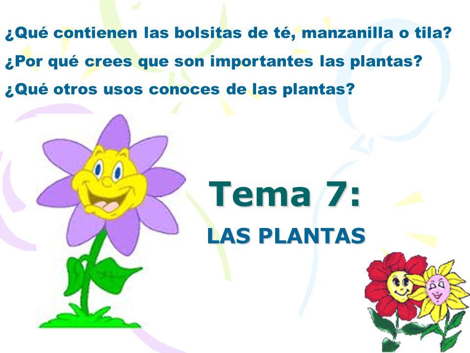 Tema 7: LAS PLANTAS ¿Qué contienen las bolsitas de té, manzanilla o tila? ¿Por qué crees que son importantes las plantas? ¿Qué otros usos conoces de l