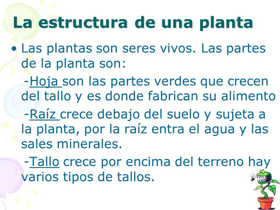 La estructura de una planta Las plantas son seres vivos. Las partes de la planta son: -Hoja son las partes verdes que crecen del tallo y es donde fabr