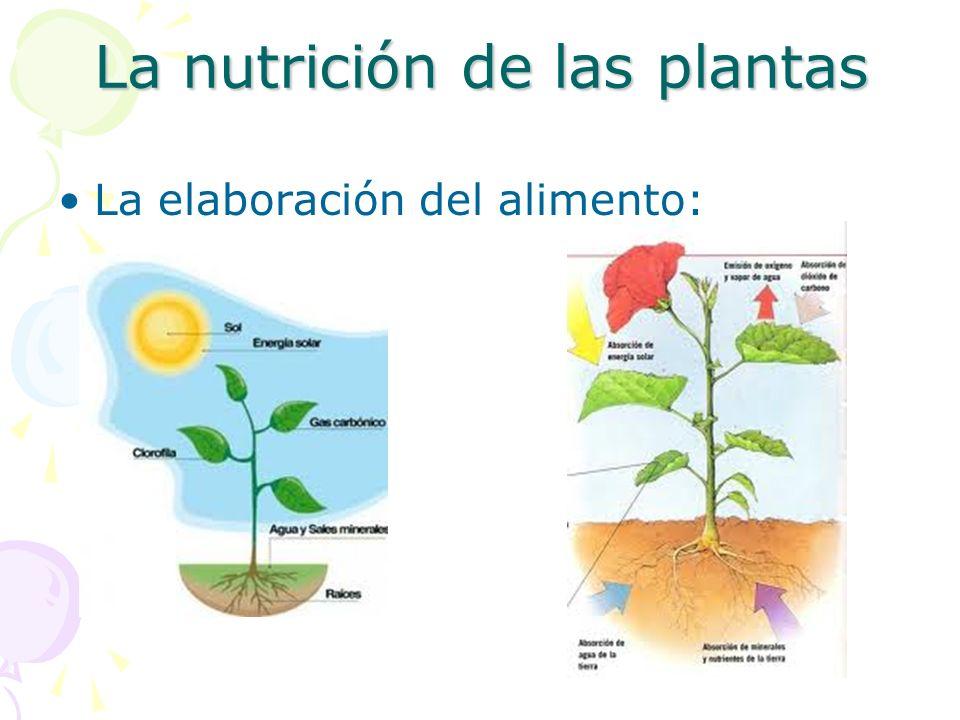 La nutrición de las plantas La elaboración del alimento: