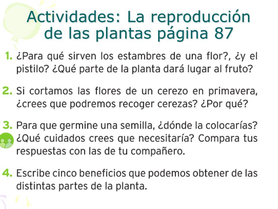 Actividades: La reproducción de las plantas página 87