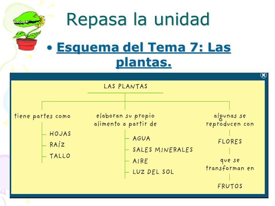 Repasa la unidad Esquema del Tema 7: Las plantas.Esquema del Tema 7: Las plantas.