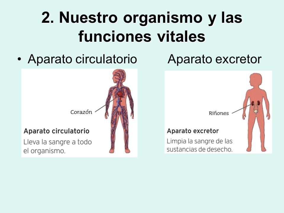 2. Nuestro organismo y las funciones vitales Aparato circulatorio Aparato excretor