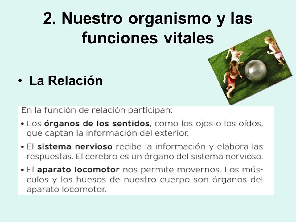 2. Nuestro organismo y las funciones vitales La Relación