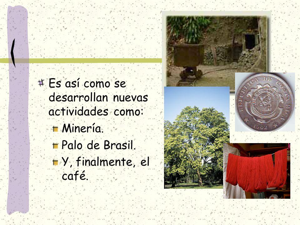 Es así como se desarrollan nuevas actividades como: Minería. Palo de Brasil. Y, finalmente, el café.
