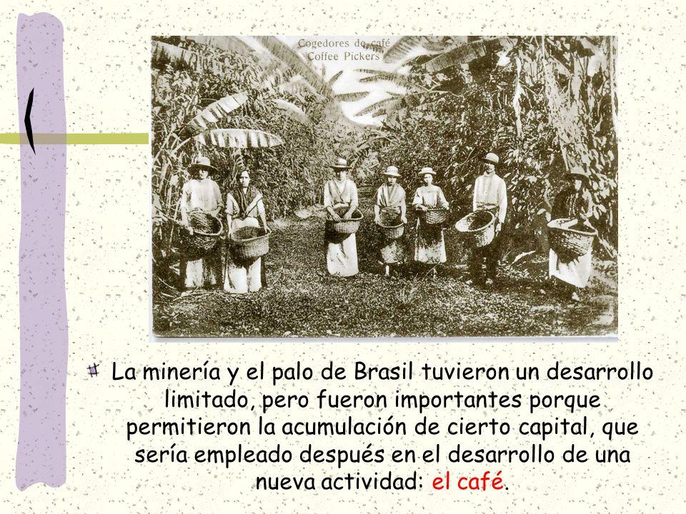 La minería y el palo de Brasil tuvieron un desarrollo limitado, pero fueron importantes porque permitieron la acumulación de cierto capital, que sería