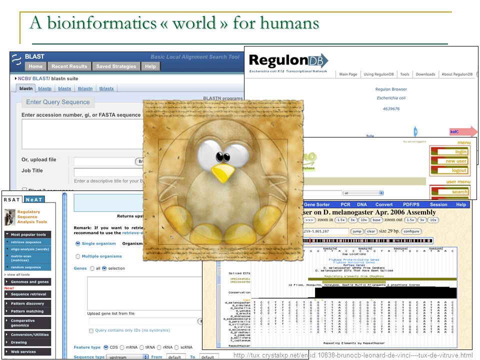A bioinformatics « world » for humans http://tux.crystalxp.net/en.id.10838-brunocb-leonard-de-vinci----tux-de-vitruve.html