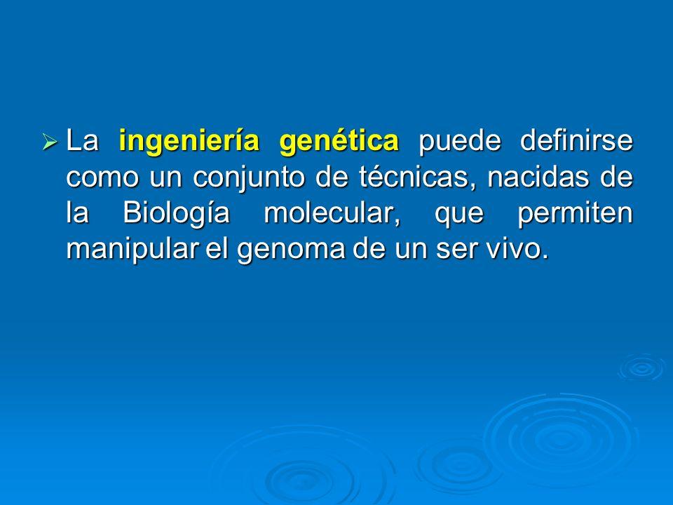 La ingeniería genética puede definirse como un conjunto de técnicas, nacidas de la Biología molecular, que permiten manipular el genoma de un ser vivo