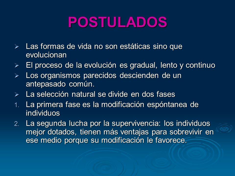 POSTULADOS Las formas de vida no son estáticas sino que evolucionan Las formas de vida no son estáticas sino que evolucionan El proceso de la evolució