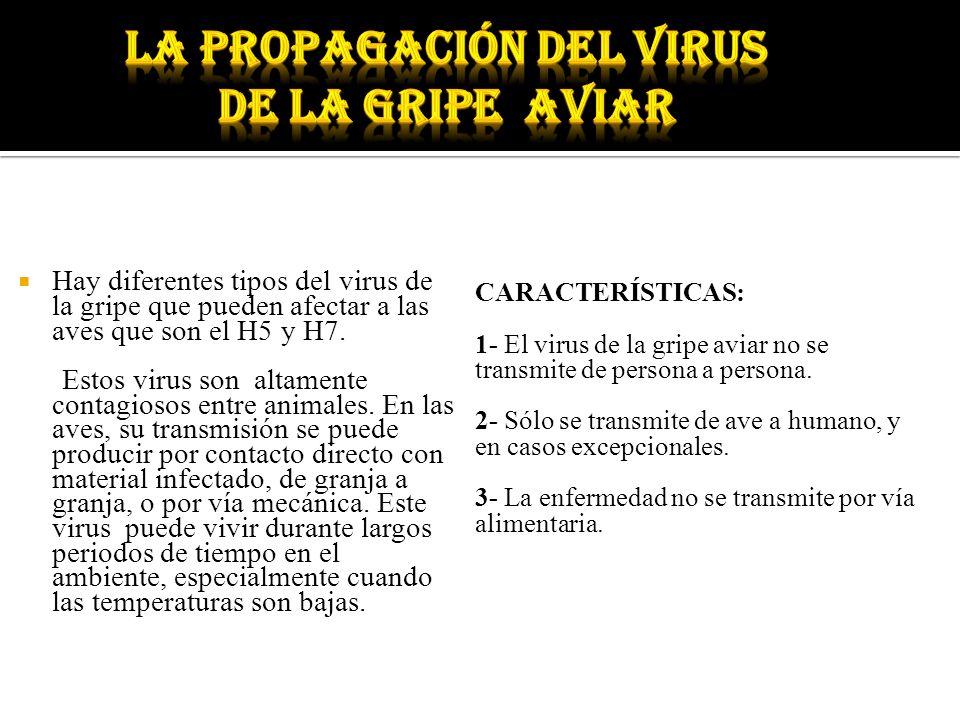 Hay diferentes tipos del virus de la gripe que pueden afectar a las aves que son el H5 y H7. Estos virus son altamente contagiosos entre animales. En
