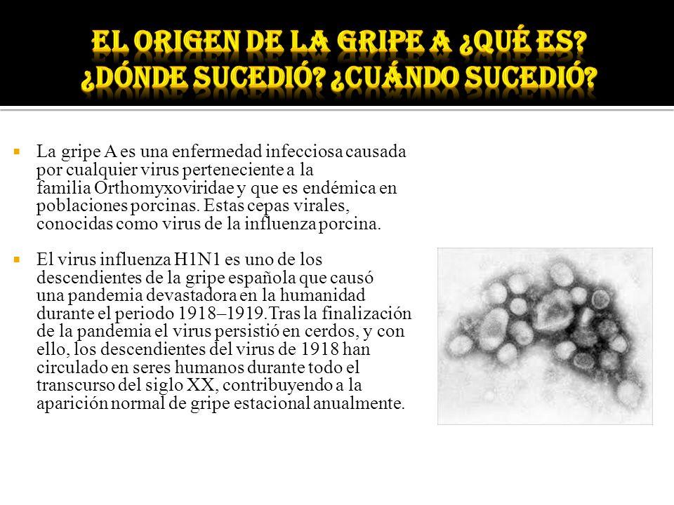 La gripe A es una enfermedad infecciosa causada por cualquier virus perteneciente a la familia Orthomyxoviridae y que es endémica en poblaciones porci