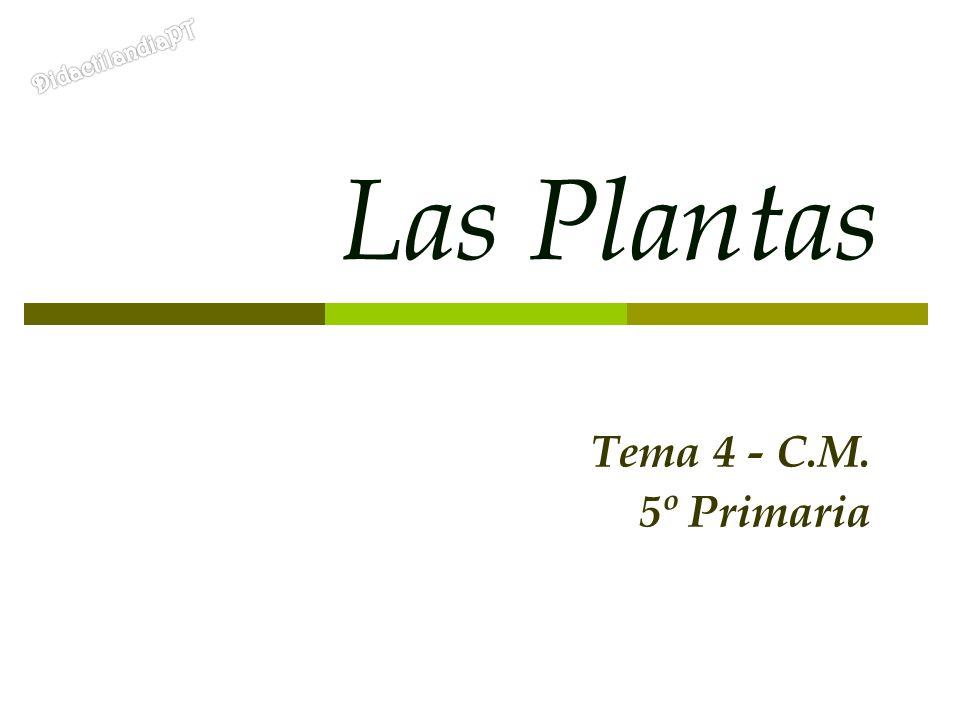 Las Plantas Tema 4 - C.M. 5º Primaria