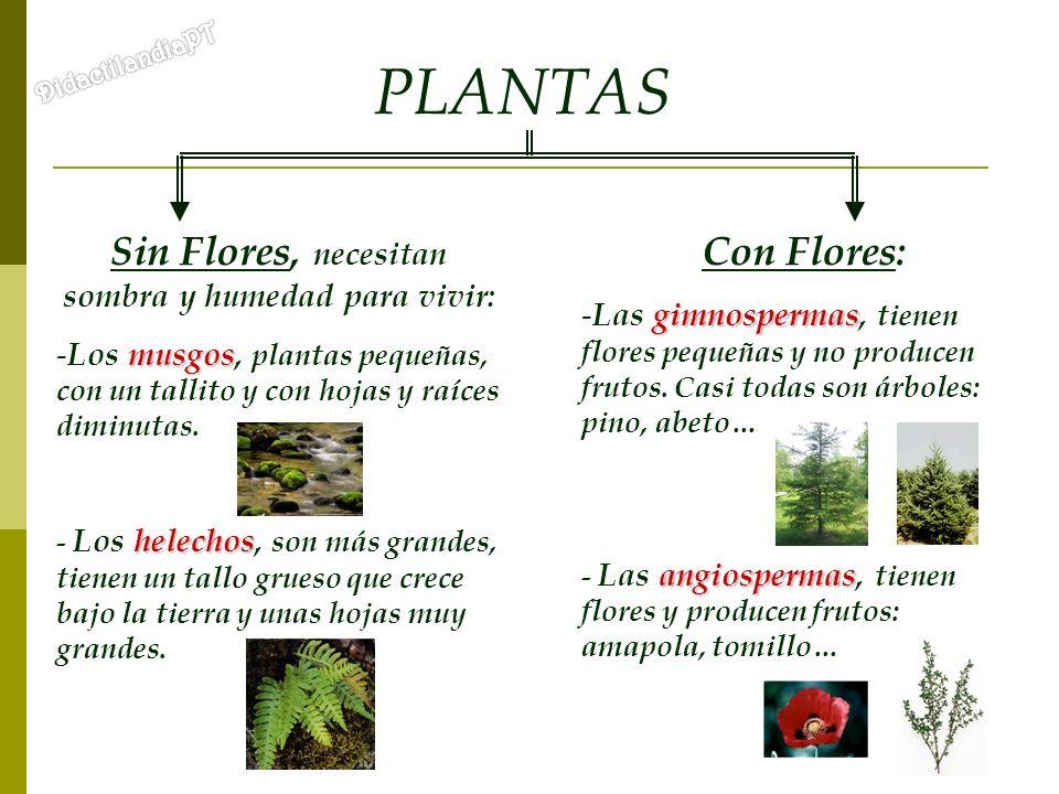 PLANTAS Sin Flores, necesitan sombra y humedad para vivir: musgos - Los musgos, plantas pequeñas, con un tallito y con hojas y raíces diminutas. helec