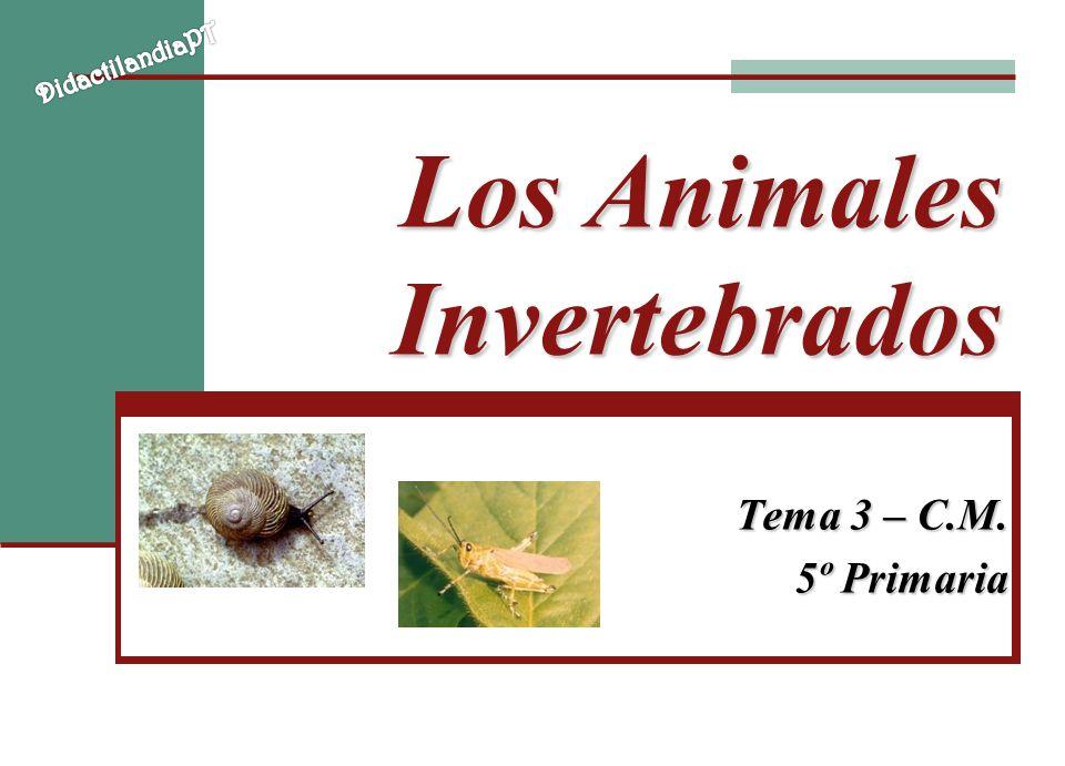 Los Animales Invertebrados Tema 3 – C.M. 5º Primaria