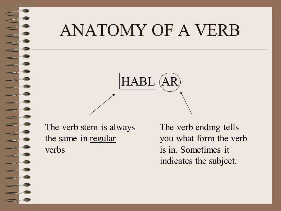 ANATOMY OF A VERB HABL AR The verb stem is always the same in regular verbs The verb ending tells you what form the verb is in. Sometimes it indicates