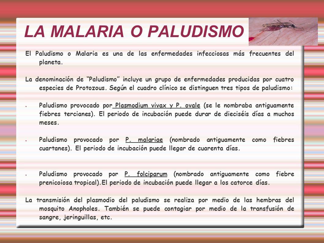 LA MALARIA O PALUDISMO El Paludismo o Malaria es una de las enfermedades infecciosas más frecuentes del planeta. La denominación de Paludismo incluye