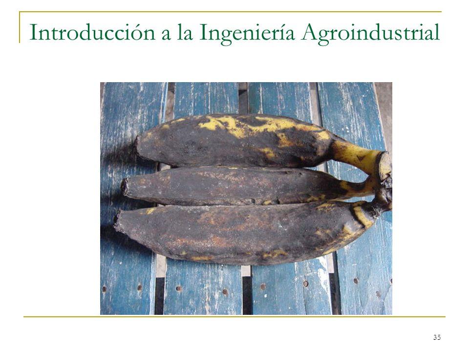 35 Introducción a la Ingeniería Agroindustrial