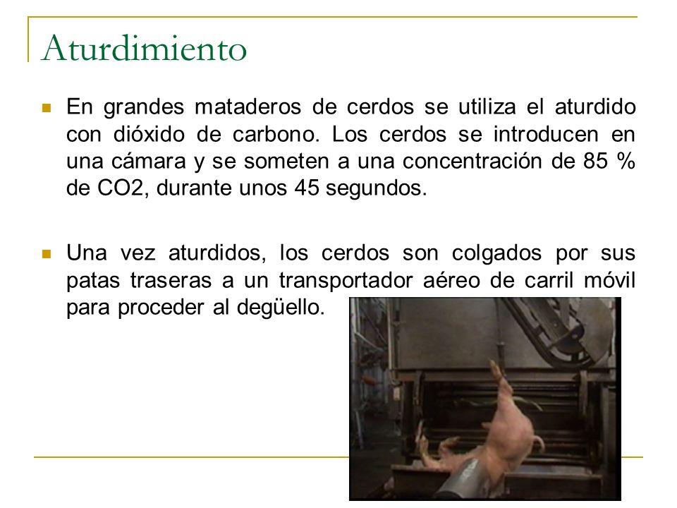 Aturdimiento En grandes mataderos de cerdos se utiliza el aturdido con dióxido de carbono. Los cerdos se introducen en una cámara y se someten a una c