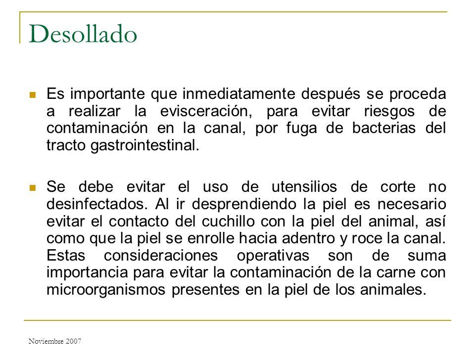 Noviembre 2007 Desollado Es importante que inmediatamente después se proceda a realizar la evisceración, para evitar riesgos de contaminación en la ca