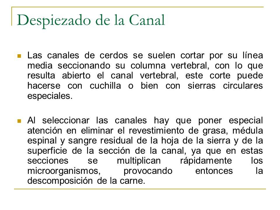 Despiezado de la Canal Las canales de cerdos se suelen cortar por su línea media seccionando su columna vertebral, con lo que resulta abierto el canal