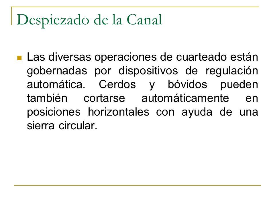 Despiezado de la Canal Las diversas operaciones de cuarteado están gobernadas por dispositivos de regulación automática. Cerdos y bóvidos pueden tambi