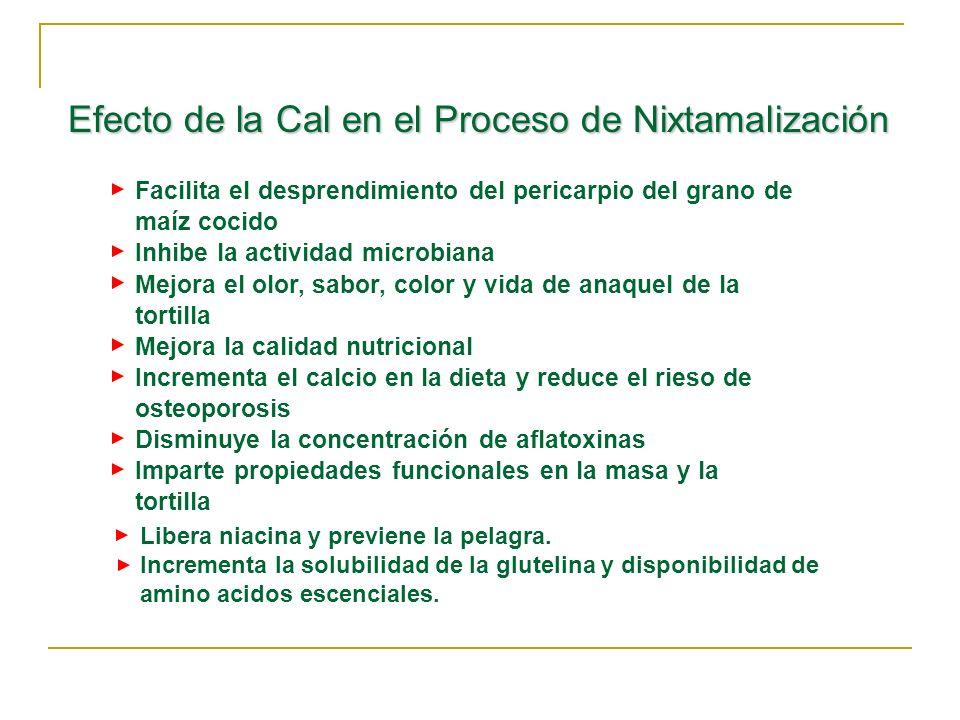 Efecto de la Cal en el Proceso de Nixtamalización Facilita el desprendimiento del pericarpio del grano de maíz cocido Inhibe la actividad microbiana M
