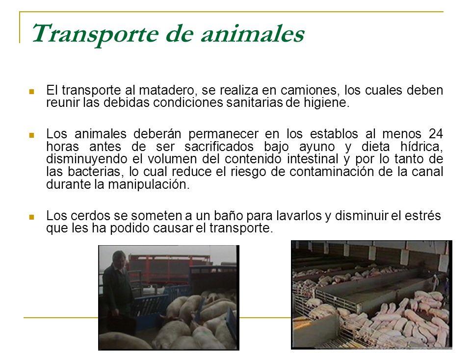 Transporte de animales El transporte al matadero, se realiza en camiones, los cuales deben reunir las debidas condiciones sanitarias de higiene. Los a