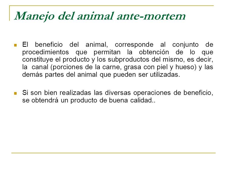 Manejo del animal ante-mortem El beneficio del animal, corresponde al conjunto de procedimientos que permitan la obtención de lo que constituye el pro